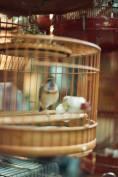 bird market